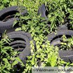 Illegale Altreifenablagerung auf einem Grünstreifen am Mühlengraben